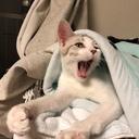 びん猫日記