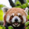 FlickerAPIを使って任意の画像を取得する #2