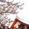 【梅の名所】その① 湯島天満宮(湯島天神)