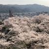 【岡山】日本さくら名所100選 津山城の桜(鶴山公園)