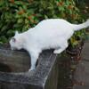 猫に夢中だった基準点インフラツーリズム
