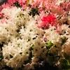 新宿を散歩していたらきれいな花が咲いていました♪♪