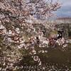 加治川治水記念公園・加治川堤の桜2019