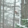 吹雪の中の小鳥たち