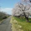 今日は、春うらら花見かな?