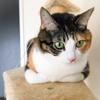 【愛猫日記】毎日アンヌさん#125