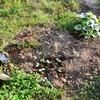 ゴミから出た芽