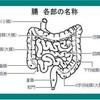 日本人の腸の長さ