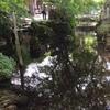 梅花藻の地蔵川にて