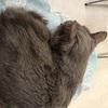 猫の鼻腔内リンパ腫⑳  食べてくれた!!
