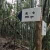 【13日目の2】日本の裏歴史に関わる!?皇室にも縁が深い『忌部(いんべ)神社』