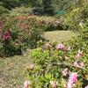 素敵な庭づくりは難しい