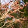 撮り足らず植物園へ Ⅰ(Googleフォト画像貼り直し)