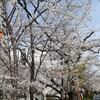 桜で食欲満たされる⁉️🌸