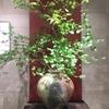 古谷和也さんの信楽大壺