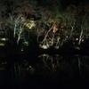 【京都観光】高台寺の夜の茶会が最高だった話