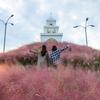 済州島(チェジュ島)秋のフォトスポット #ピンクミューリーが見られるスポット特集