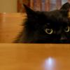 猫ログ:今日の王子3