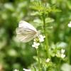 蝶を見たら良いことあるみたい🦋