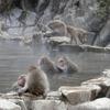 地獄谷野猿公苑と信州渋温泉のミステリーゾーン