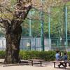 葉桜の頃 ZUIKO DIGITAL 50mm F2.0