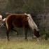 馬の島シャックルフォードバンクスへ。案の定馬糞だらけの馬糞島!
