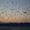 浜ちゃん日記  浜名湖の壮観な海鳥の集団行動