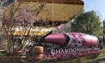 お洒落で可愛い!MIDTOWN BLOSSOM 2019(ミッドタウン・ブロッサム)と周辺をぷらぷらお花見♥