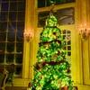 クリスマスのつめあわせ、アメリカの様々なクリスマスツリー