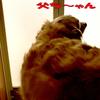 風呂場を覗き見するゴールデンレトリバー