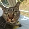 ぱっちり猫目。