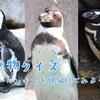 【クイズ#2】生き物クイズ~ペンギンを見分けてみよう編~