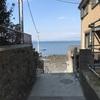 見所満載!猫のパラダイス江ノ島
