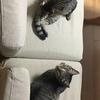 猫の走る音