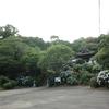 春光寺のアジサイを見てきました。
