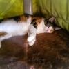 【愛猫日記】毎日アンヌさん166