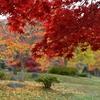 もう一度ダム公園の紅葉…