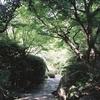 紫陽花とひまわり-ローライフレックス-
