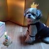 くーちゃんのお誕生日