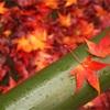 【京都紅葉巡り*2】曇りでも大丈夫◎しっとりと美しい紅葉を堪能してきた〜源光庵・光悦寺・北野天満宮