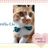 猫ちゃんのお写真紹介.第6弾