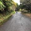 屋久島1周ecoマラニック完走しました(前日編)