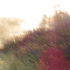 ハワイ島(9)ワイピオ渓谷~アカカ滝~キラウエア