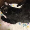 黒猫のネコタとシャム猫になりたいヲネコママ