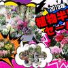 年末恒例植物半額セール♪(^^♪