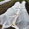ミニ白菜、キャベツ、大根と冬野菜の植え付け