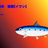 釣果情報 函館市 2018年7月上旬~下旬(夏) 【イワシ】