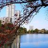 11月18日(月)湯島での取材と、上野でいただいたきしめん。