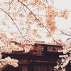 桜模様の阪急電車