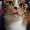 3-284   気まぐれ猫、みいちゃんのお話